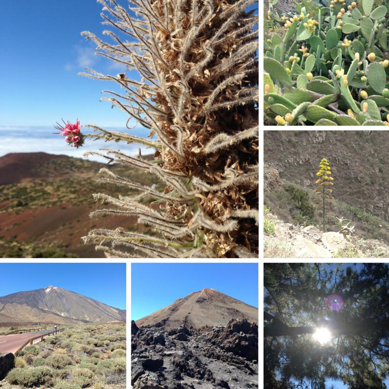 Tenerife 2015 | Bladzijde26