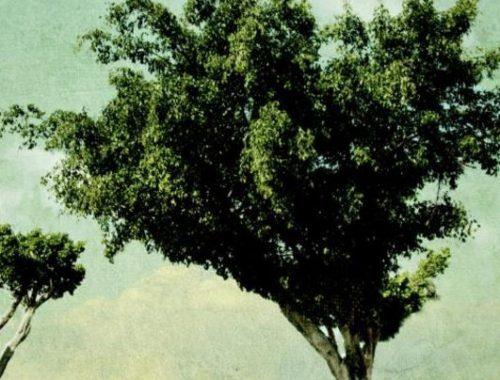 Een geweer, een koe, een boom en een vrouw   Meir Shalev